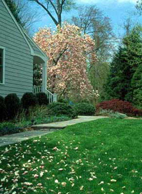 Local Near Me Landscape Designers We Do It All