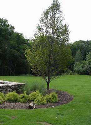 Charlotte Nc Landscape Company Amazing Prices