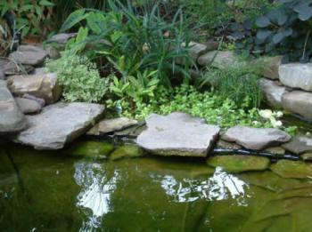 Local koi pond builders koi ponds remodel repair liner for Ornamental pond fish types