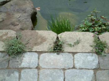 Charlotte Nc Ponds Installer Builders 2019 Build Water